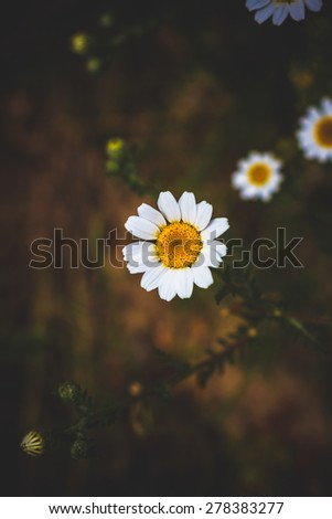 Background of white spring flowers - stock photo
