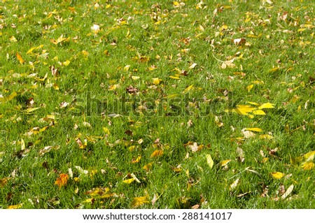 background of yellow leaves on the grass in autumn - stock photo