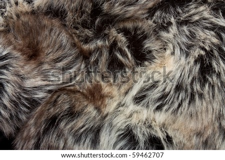 Background or texture image of close up of fur. - stock photo