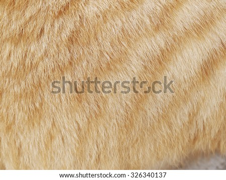 Background patterned hair of cat - stock photo