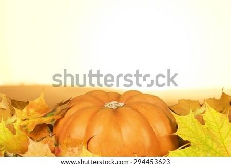 Background, pumpkin, squash. - stock photo