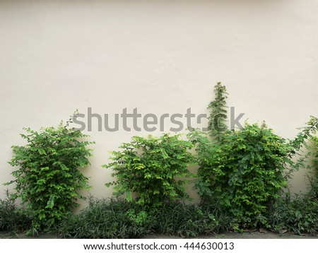 background texture from a white wall with parallel horizontal lines and green plant - stock photo