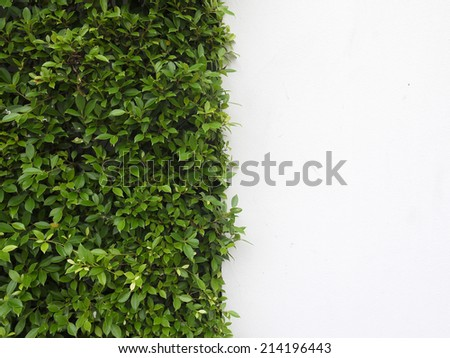background texture from a white wall with parallel horizontal lines and green plants - stock photo