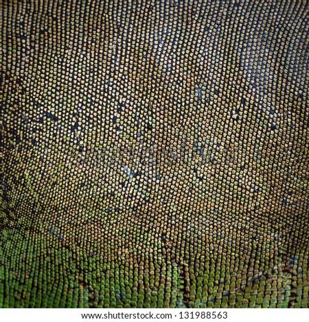 background texture iguana skin - stock photo