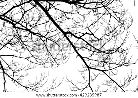 Background texture of dead wood tree branches on flat white background for use as creativity material design or inspiration of abstract nature and environment preserve. - stock photo