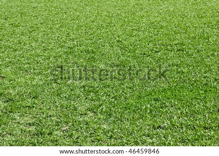 Background texture with green natural grass in a public park soccer field , side view - stock photo