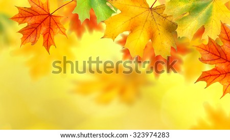 background with autumn leaves. Header for website - stock photo