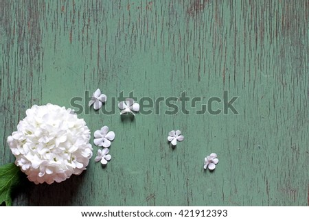 Background with blooming Viburnum opulus sterilis (Snowball tree, Guelder Rose, Cramp Bark, Water Elder, Cranberrybush) white flowers, close up, selective focus, place for text - stock photo