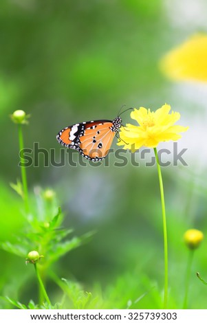 Background with butterflies and yellow flowers featured component. By dissolving backdrop Or blurring in whole or in part. - stock photo