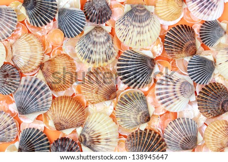 Background with colorful sea shells - stock photo
