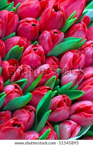 background with colorfull buch of tulip flowers - stock photo