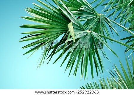 Background with design of tropical palm tree leafs - stock photo
