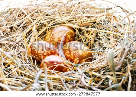 Background with Easter Eggs in bird nest - stock photo