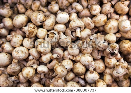 Background with fresh champignons, selective focus, toned image - stock photo