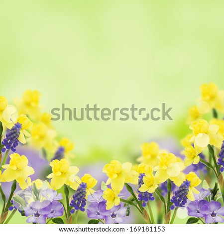 Background with fresh daffodils and muscaries. Abstract flowers background. Easter background. - stock photo