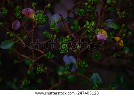 Background with green branches of a bush close-up - stock photo