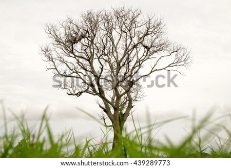 Backgrounds and textures tree without leaves. Tree dried in summer. old tree. Bare lone tree in spring. A tree in the wilderness. - stock photo
