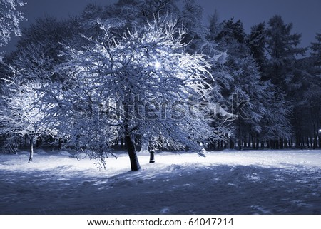 Backlighted tree covered with snow against dark trees and lantern. Park scene. Night shot. - stock photo