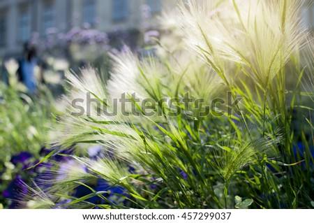 Backlit decoration grass in garden. - stock photo