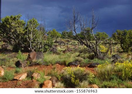 Backlit desert landscape, junipers, snags and scrub brush, Torrey,Utah  - stock photo