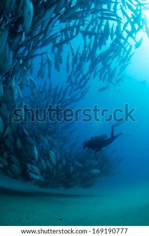 backlit diver - stock photo