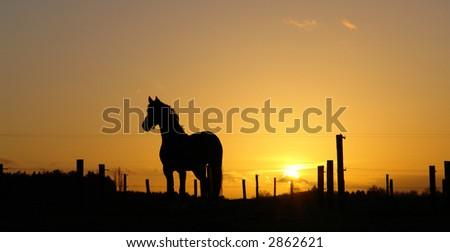 Backlit Horse Sunset - stock photo