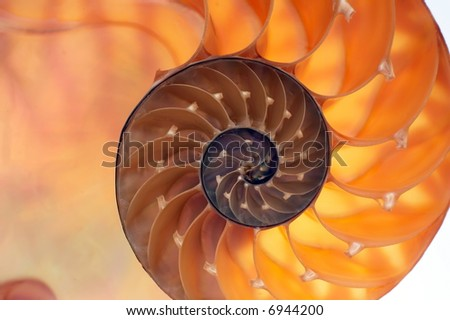 Backlit inside of nautilus shell - stock photo