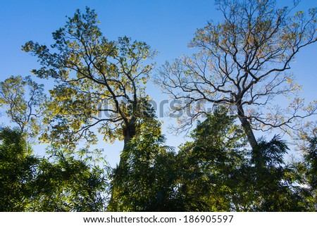 Backlit of big tree in the forest - stock photo