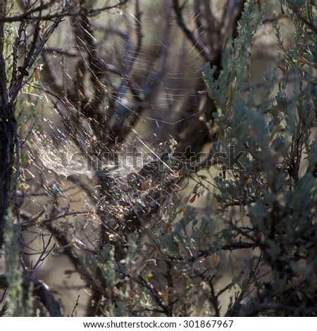 Backlit spider web shows pattern and sparkling colors - stock photo