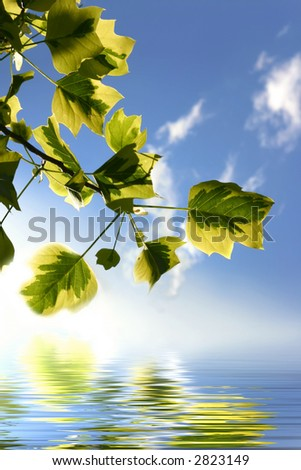 Backlit tree branch with water and reflections on waves - stock photo
