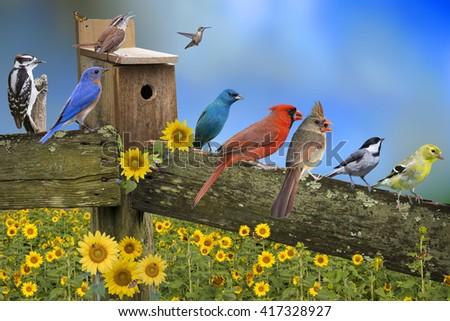 Backyard Bird Congregation on Weathered Fence Board - stock photo