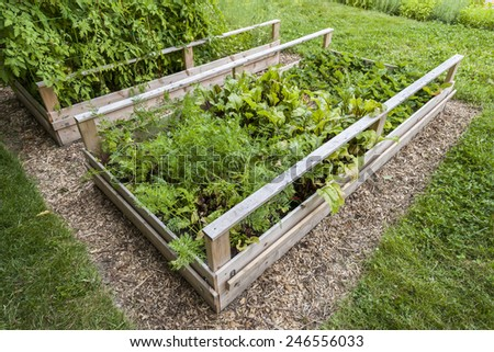 Backyard vegetable garden in wooden raised beds or boxes - stock photo