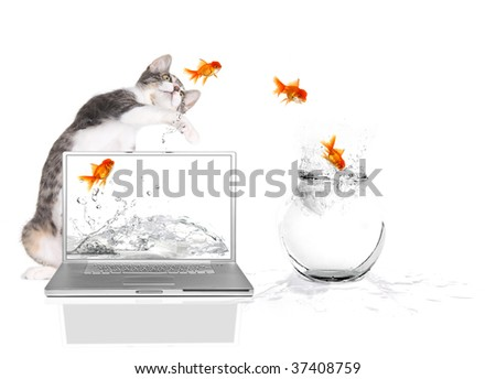 Bad Kitty Pawing at Goldfish Flying Out of Water - stock photo