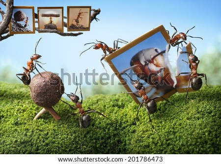bad perspective of Obscura  and photographer, ant tales - stock photo