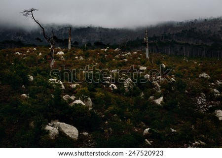 bad weather in mountainous terrain. yalta mountain-forest nature reserve. low key. dry trees - stock photo