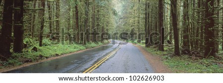 Bad Weather Road, Hoh Rain Forest, Olympic National Park, Washington State - stock photo