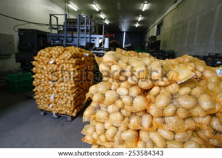 Bagged potatoes, prepared for transport and sale - stock photo