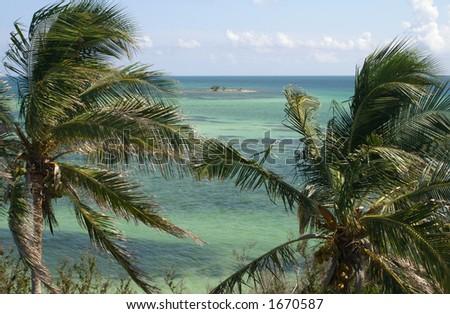 Bahia Honda Island with two Palms - stock photo