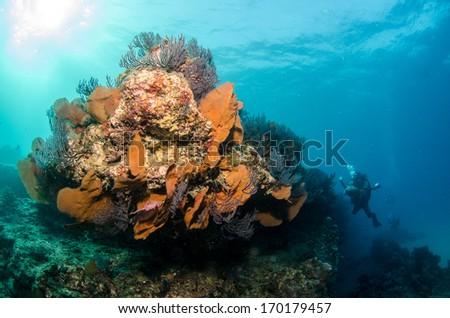 baja reef - stock photo