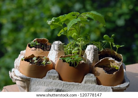 Balcony gardening in eggshells - stock photo