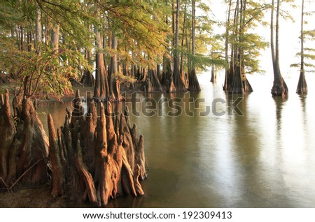 Bald Cypress Trees at the Lakes Edge as the Sun Sets - stock photo