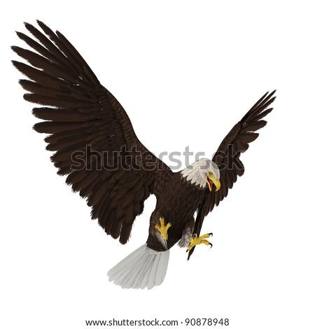 bald eagle hunting - stock photo