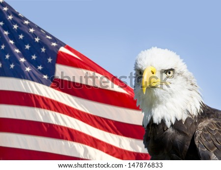 Bald eagle in front of American flag - stock photo