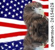 Bald Eagle in guarding American Flag - stock photo