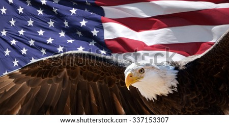 Bald eagle taking flight in front of an American flag - stock photo