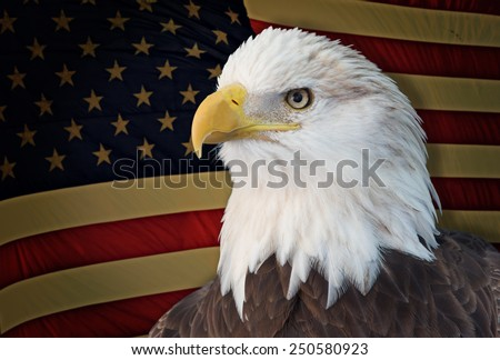Bald eagle with grungy old american flag out of focus. - stock photo