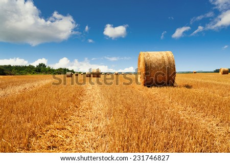 Bale of a straw on harvest field  - stock photo