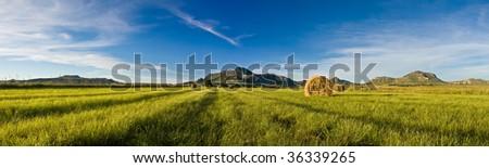 Bale panorama - stock photo