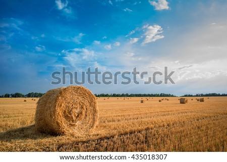Baled field - stock photo