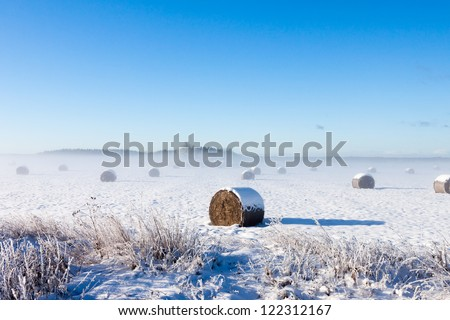 Bales of hay laying in snow on field - stock photo